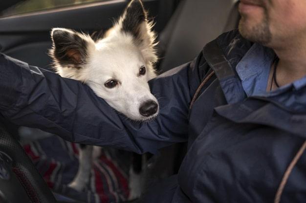 ¿Cómo viajar en coche con mi mascota? - marbenjoparking.com